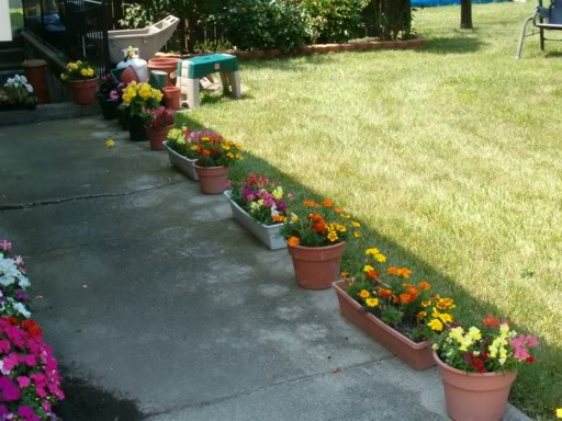 Planting potted annuals in Brookfield, WI