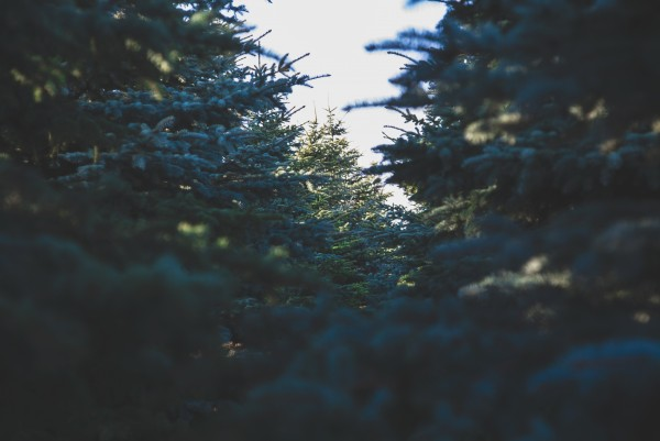 Christmas tree selection in Brookfield, WI