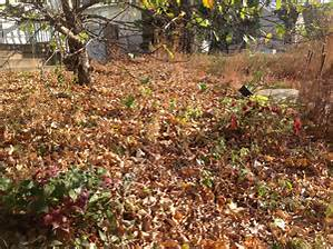Fall leaf cleanup in Brookfield, New Berlin, Elm Grove, WI