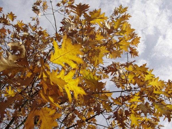 Fall leaves and yard cleanup in Brookfield, WI