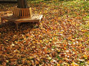 Fall leaves cleanup in Brookfield, Elm Grove WI