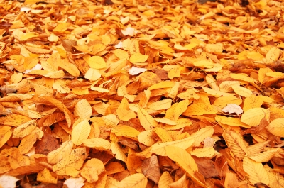 Managing fall leaves in Brookfield, WI