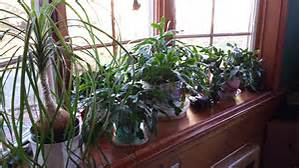 Winter houseplants in Brookfield, WI