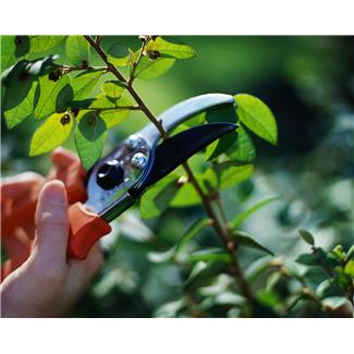 Summer plant pruning in Brookfield and Elm Grove, WI
