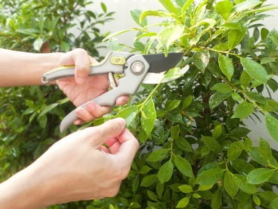 Summer pruning in Brookfield, WI