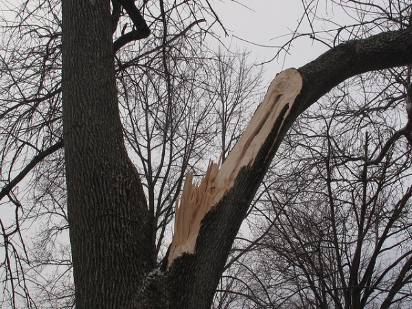 Tree pruning in Brookfield and Elm Grove, WI